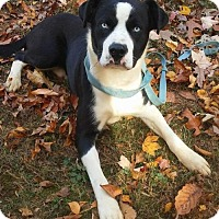 Adopt A Pet :: Blue eyes - Randleman, NC