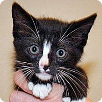 Adopt A Pet :: 317312 - Wildomar, CA