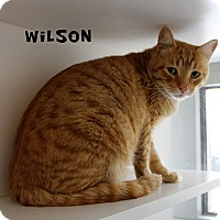 Adopt A Pet :: Wilson - Edgewood, NM