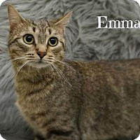 Adopt A Pet :: Emma - West Des Moines, IA