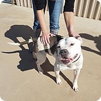 Adopt A Pet :: Joey - Wichita Falls, TX