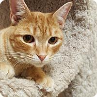 Adopt A Pet :: Ducky - Smithfield, NC