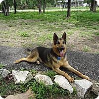 Adopt A Pet :: KASON - SAN ANTONIO, TX