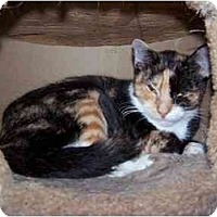 Calico Cat for adoption in Winnsboro, South Carolina - Camille