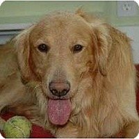 Adopt A Pet :: Dodger - Denver, CO