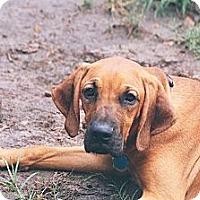 Adopt A Pet :: Spud - St, Augustine, FL