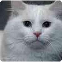 Adopt A Pet :: Chevalier - Columbus, OH