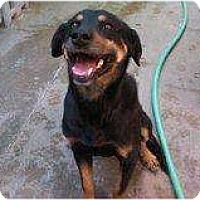 Adopt A Pet :: Huck - Alliance, NE