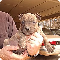 Adopt A Pet :: Ricco - Russellville, AR