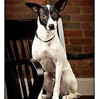Adopt A Pet :: Ace - Owensboro, KY