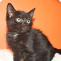 Adopt A Pet :: HEDY - SILVER SPRING, MD