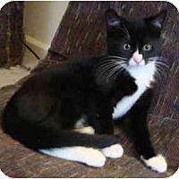 Adopt A Pet :: Figaro - Davis, CA