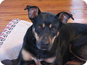 Doberman Pinscher/Shepherd (Unknown Type) Mix Dog for adoption in Spartanburg, South Carolina - Pria - Adoption Pending