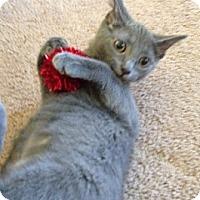 Adopt A Pet :: Itsy - Byron Center, MI