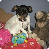 Adopt A Pet :: MIA - Mahopac, NY