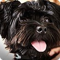 Adopt A Pet :: Gizmo - Hampton, VA