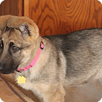 Adopt A Pet :: Jane - Flower Mound, TX