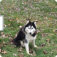 Adopt A Pet :: Clyde - Zanesville, OH