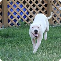 Adopt A Pet :: Rory - Tuscola, TX