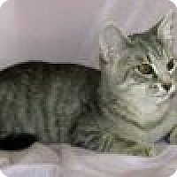 Adopt A Pet :: Wilma - Powell, OH