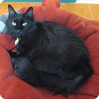 Adopt A Pet :: Joy - Lakewood, CO