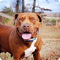 Adopt A Pet :: Emmy - Virginia Beach, VA