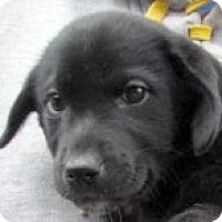 Adopt A Pet :: April - Germantown, MD