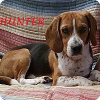 Adopt A Pet :: HUNTER - Ventnor City, NJ