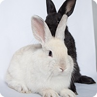Adopt A Pet :: Saturn - Los Angeles, CA