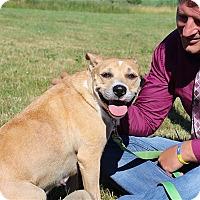 Adopt A Pet :: LaLa - Elyria, OH