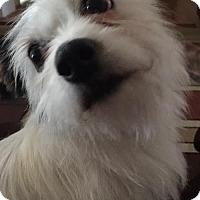 Adopt A Pet :: Genie - Sparks, NV