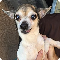 Adopt A Pet :: Crouton - Westminster, CA