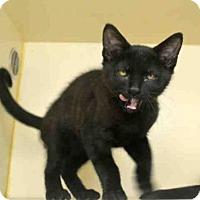 Adopt A Pet :: SUNDANCE - Pittsburgh, PA