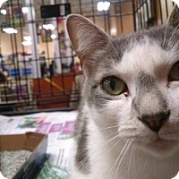 Adopt A Pet :: *Cookie - Pembroke, GA