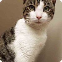 Adopt A Pet :: Luke - Plainfield, IL