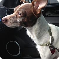 Adopt A Pet :: BAXTER - Cleveland, TN