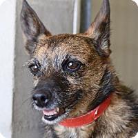 Adopt A Pet :: Kinley - Colorado Springs, CO