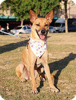 Shepherd (Unknown Type) Mix Dog for adoption in San Mateo, California - Sally