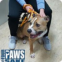 Adopt A Pet :: Alex - Maryville, IL