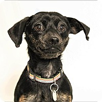 Adopt A Pet :: Jedha - San Luis Obispo, CA