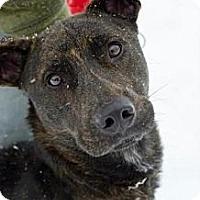 Adopt A Pet :: Brach - Westpark, OH