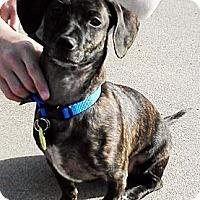 Adopt A Pet :: Reggie - San Jose, CA