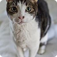 Adopt A Pet :: Galiano - New York, NY