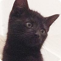 Adopt A Pet :: Kenicki - North Highlands, CA