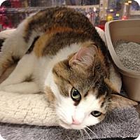 Adopt A Pet :: Nessie - Gilbert, AZ