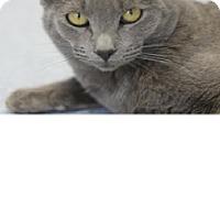 Adopt A Pet :: Nubby - El Cajon, CA