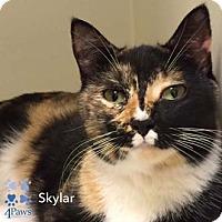 Adopt A Pet :: Skylar - Merrifield, VA