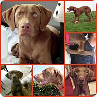 Adopt A Pet :: JAX - Davenport, FL