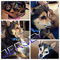 Adopt A Pet :: Jersey - ROME, NY