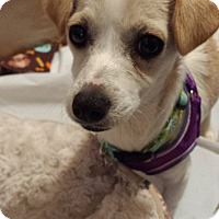 Adopt A Pet :: Trish - Pending Adoption - Gig Harbor, WA